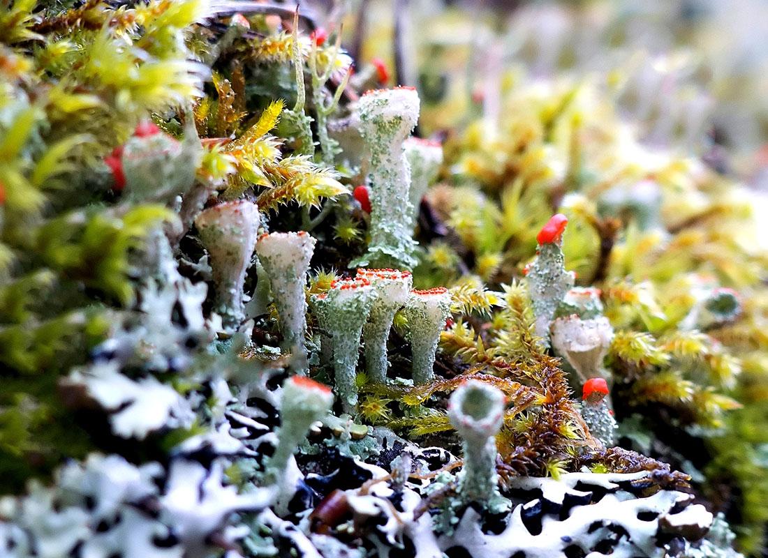 Porosty i inne rośliny