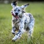 Czemu psy (i nie tylko) kochają biegać?