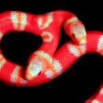Co dwie głowy to nie jedna, czyli jak karmić dwugłowego węża