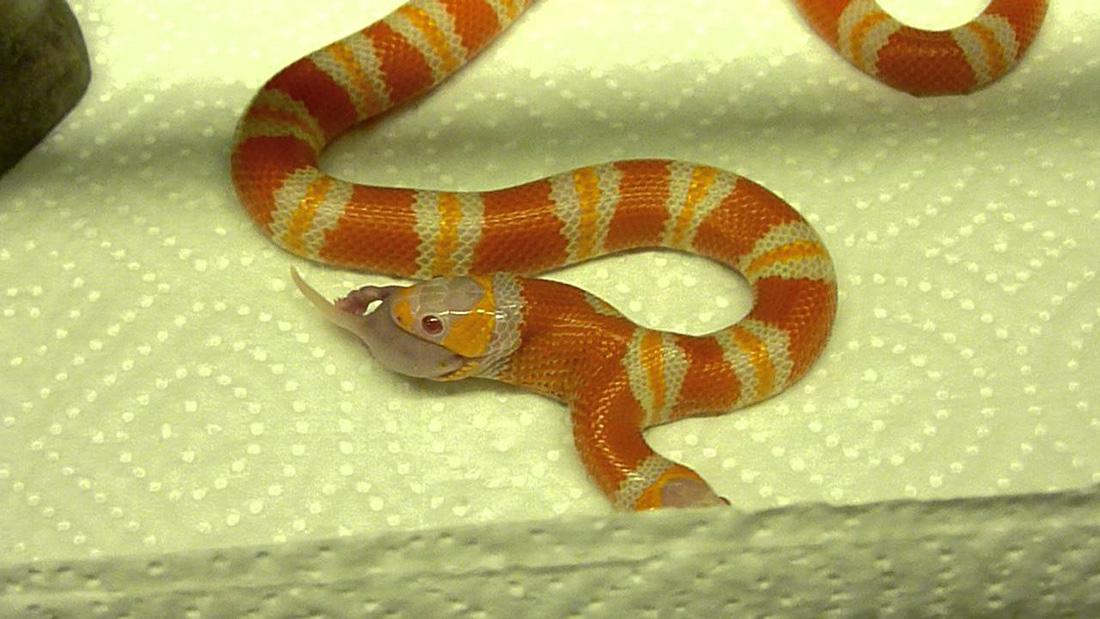dwugłowy-wąż-wpis