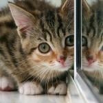 Co zwierzęta widzą w lustrze?