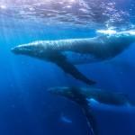 Jak brzmi głębia oceaniczna?