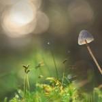 Co dzieje się w mózgu po spożyciu grzybków halucynogennych?