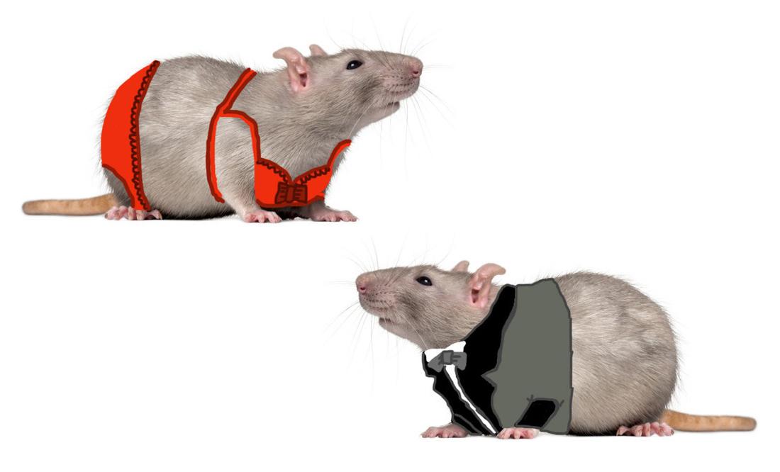 szczury-w-bieliźnie