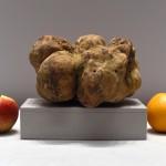 Biała trufla – jeden z najdroższych produktów spożywczych na świecie