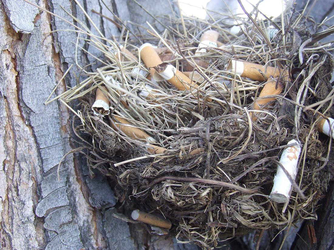 gniazdo-papierosowe