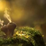 8 hipnotyzujących GIFów pokazujących, jak rosną grzyby