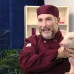 Dlaczego kochamy psy a jemy świnie?