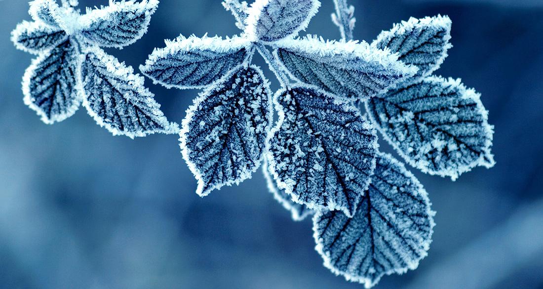 zima-3