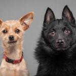 Pies potrafi rozpoznać emocje na ludzkiej twarzy. Przecież my to wiemy…