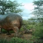 Niesamowite fotografie zwierząt zrobione za pomocą ukrytych aparatów