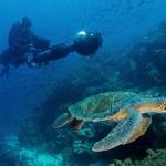 Światowy Dzień Oceanów. Niesamowita podróż pod wodę z Google Street View