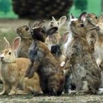 Wyspa królików i jej mroczna przeszłość