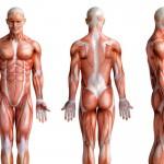 Szybciej, wyżej, dalej, czyli krótko o tym jak badania genetyczne wpływają na trening wyczynowych sportowców