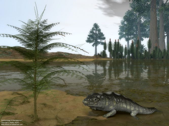 A Late Devonian Ichthyostega emerges from waters of a floodplain 365 million years ago in what is today the Canadian Arctic. On the left is a four-foot-tall Rhacophyton ceratangium, an ancient shrub that is thought to be one of the earliest ferns. On the horizon are more Rhacophyton, along with towering Archaeopteris and Lycopsids in various stages of growth.