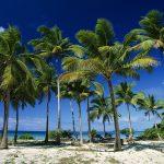 Spadające kokosy zabijają – prawda czy mit?